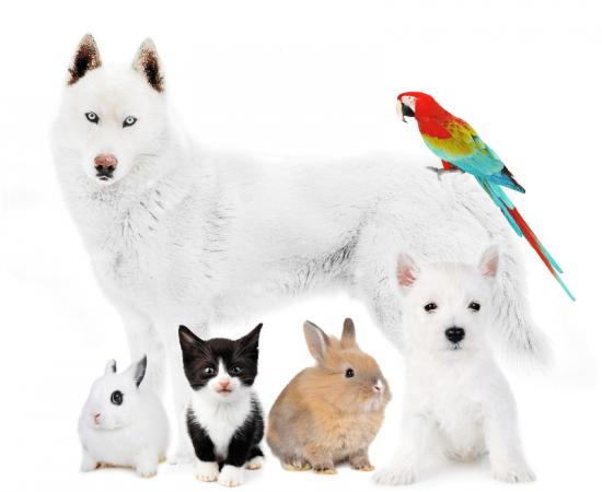 mascotas-amazon