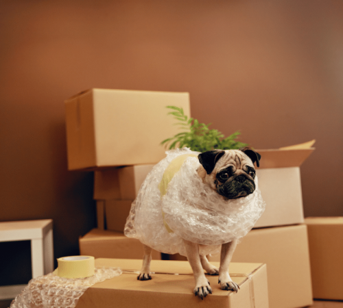 mascotas-box-amazon
